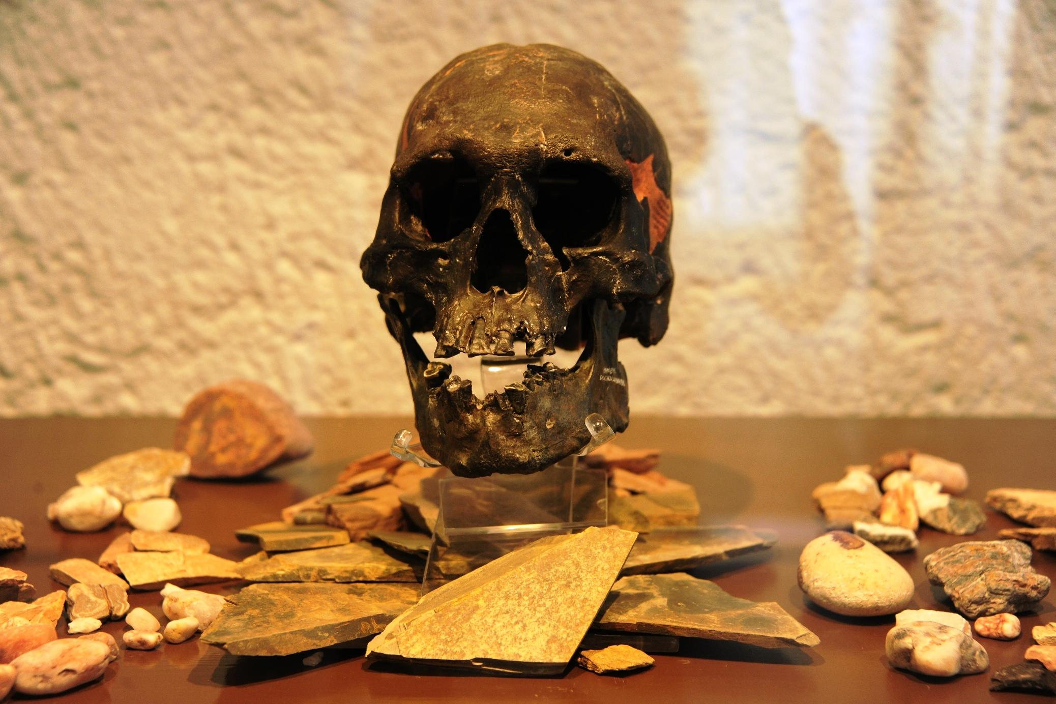 Exhiben la reproducción del cráneo fósil del Hombre de Chimalhuacán ...